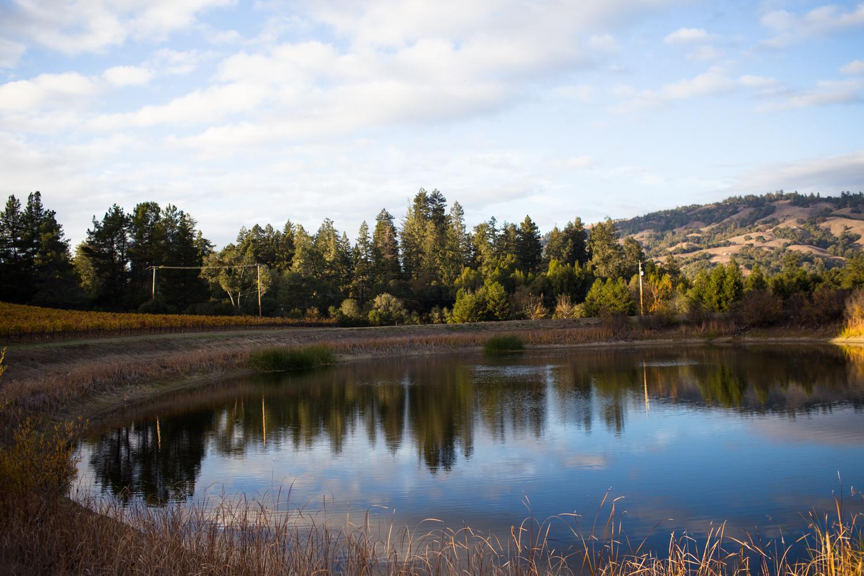 goldeneye winery vineyard anderson valley mendocino county philo boonville