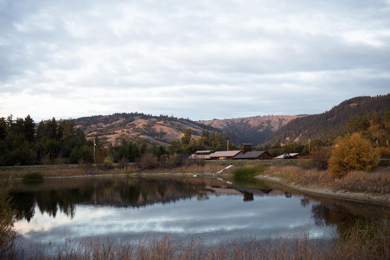 goldeneye winery vineyard philo anderson valley mendocino county boonville