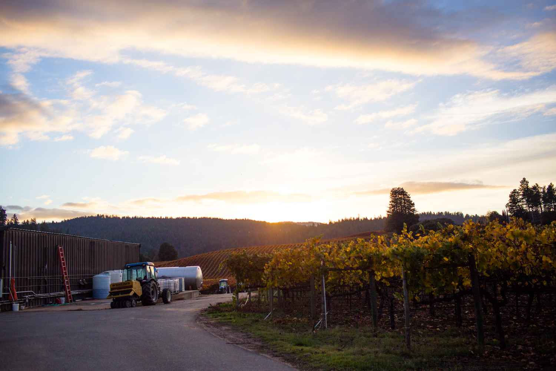 goldeneye winery philo anderson valley