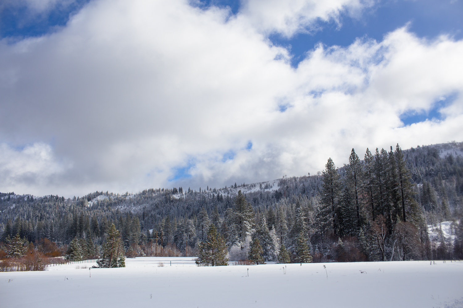Bear valley tahoe national forest snowshoing