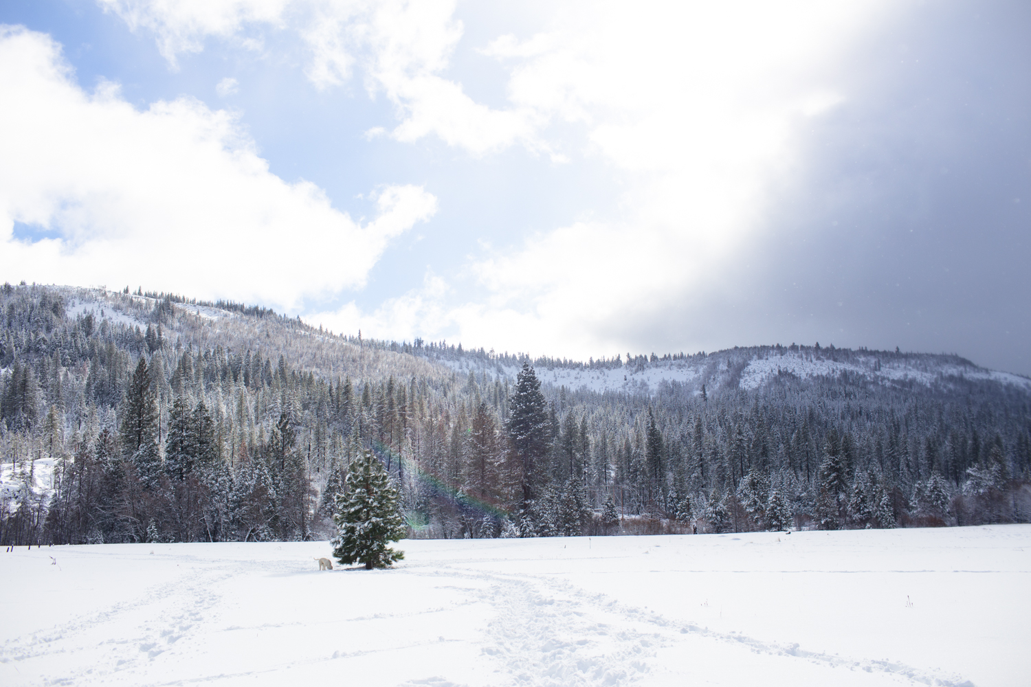 tahoe national forest snowshoeing