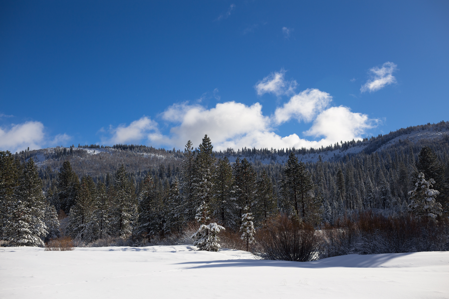 tahoe national forest snowshoeing bear valley nevada county