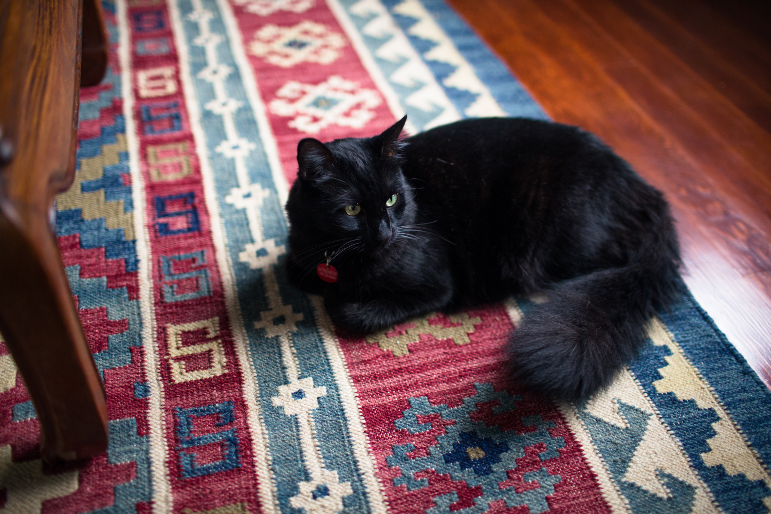 kilim rug kitty hardwood