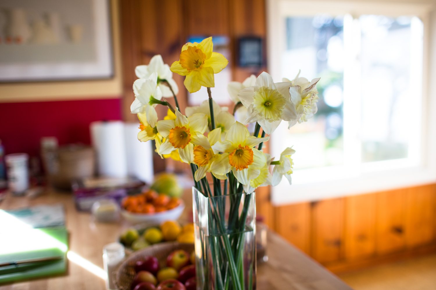 daffodils lifestyle photographer nevada county