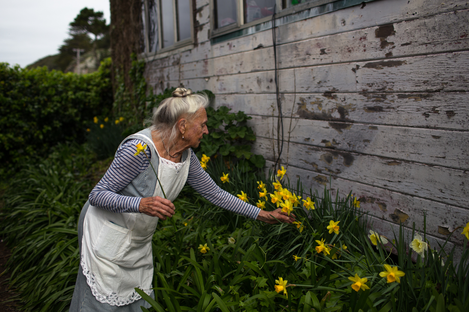 picking daffodils nevada county portrait photographer