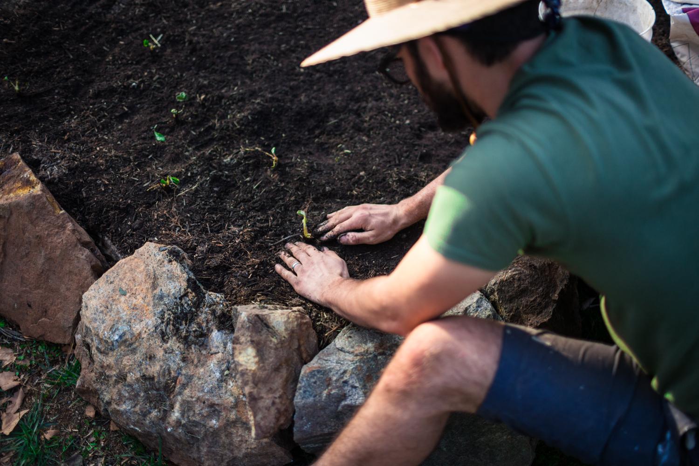 planting strawberries grass valley