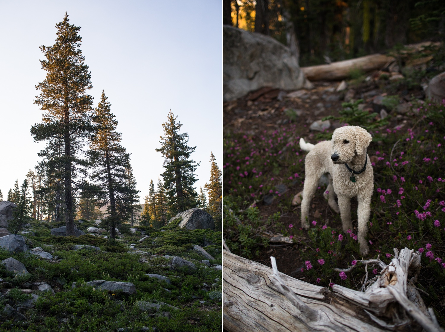 pooch in the mountains