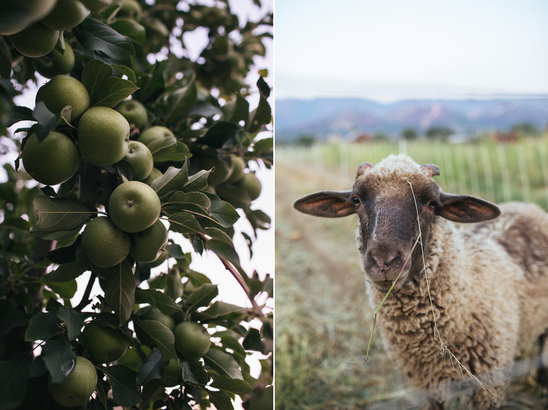 farm-to-table-wedding-nevada-city.jpg