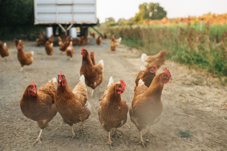 full-belly-farm-wedding-nevada-city-sacramento-farm-to-table-4.jpg