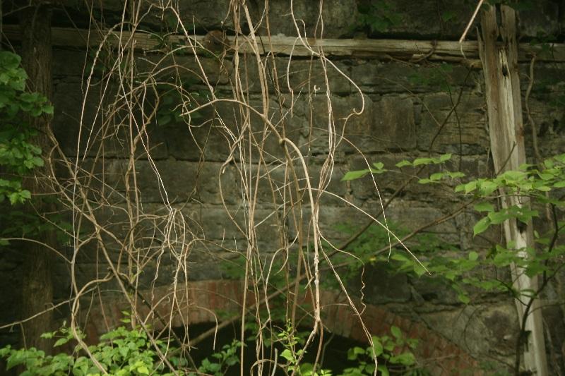 Catskills4.jpg