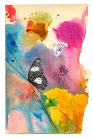 Butterfly 1