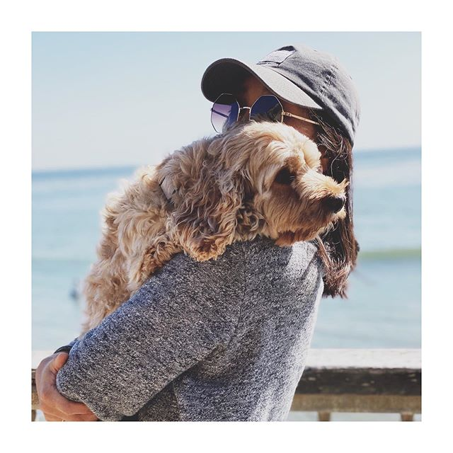 My sister took this portrait of me with champ in Santa Cruz. 🐕s Instagram: @hello_im_champ 📸 @michellefaithlee #cockapoo #dogsofinstagram #puppy