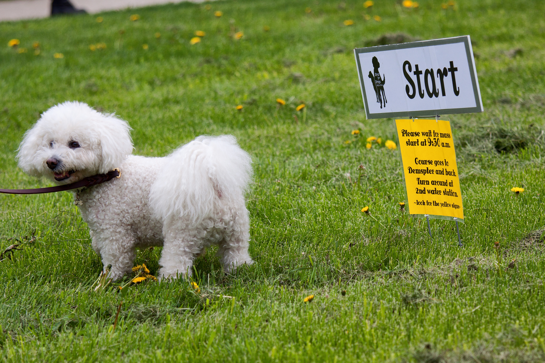 Strut for Strays 2013