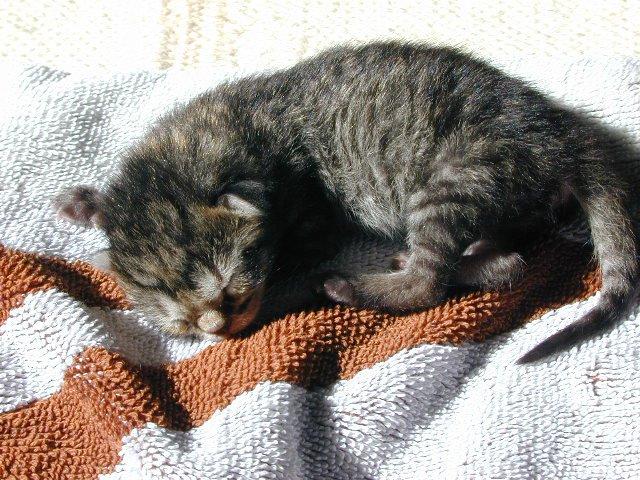 Tiny Tycho