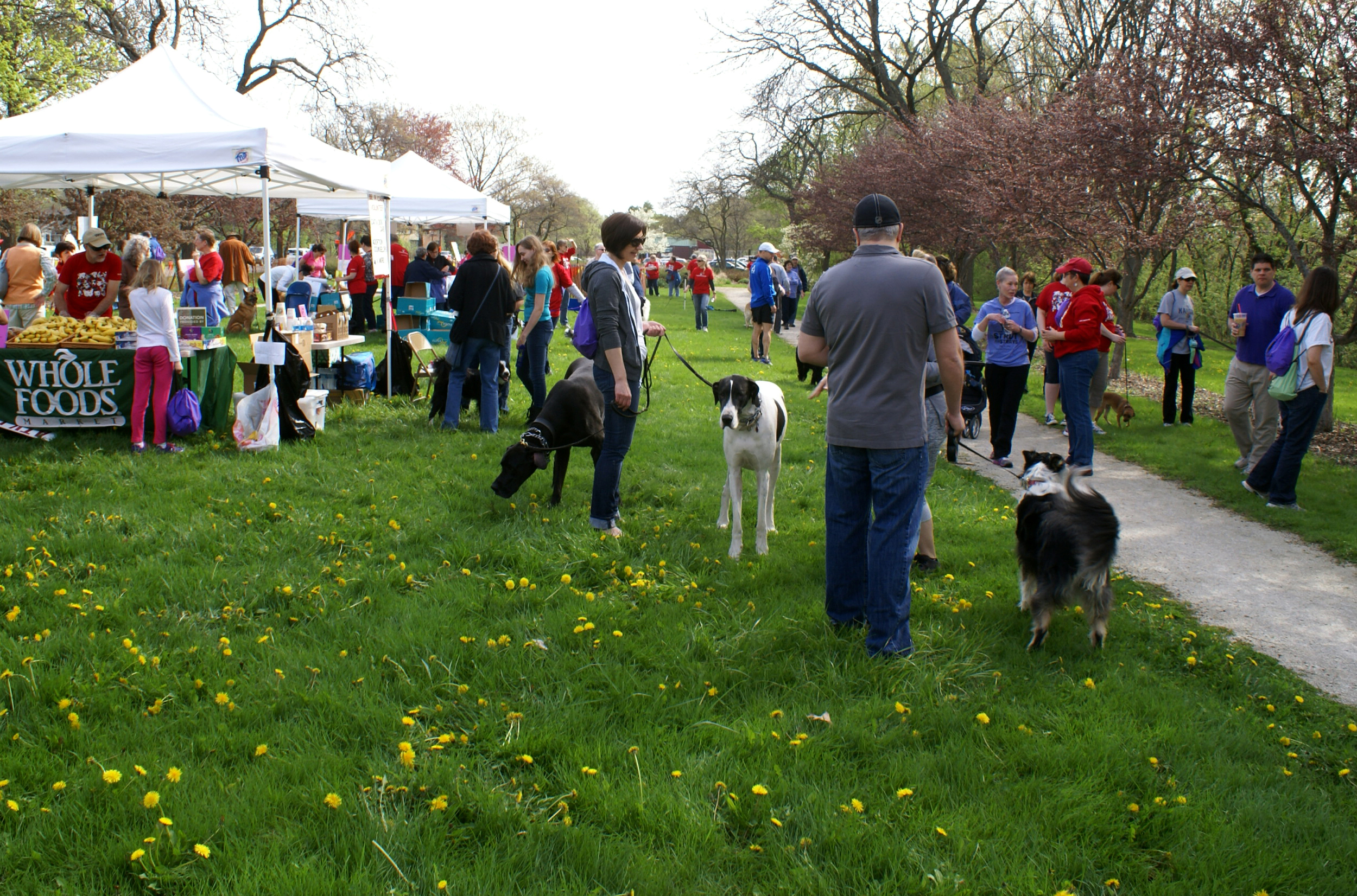 2014 Strut for Strays
