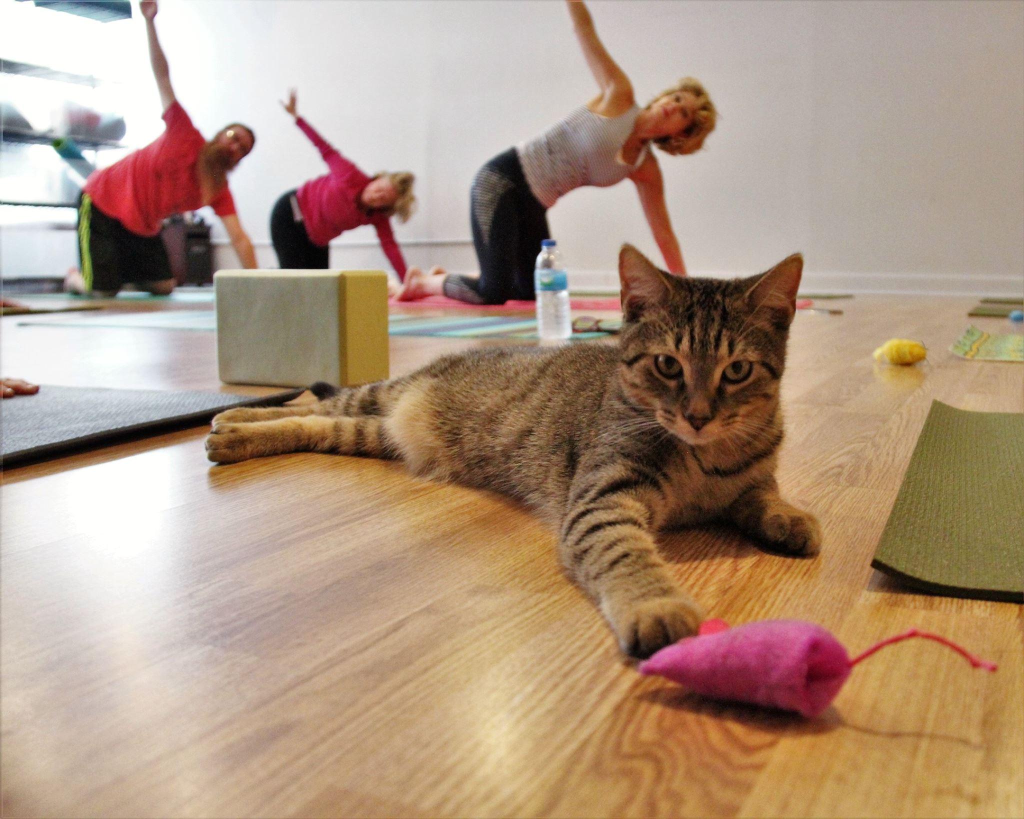 October 2016 Yoga4.jpg