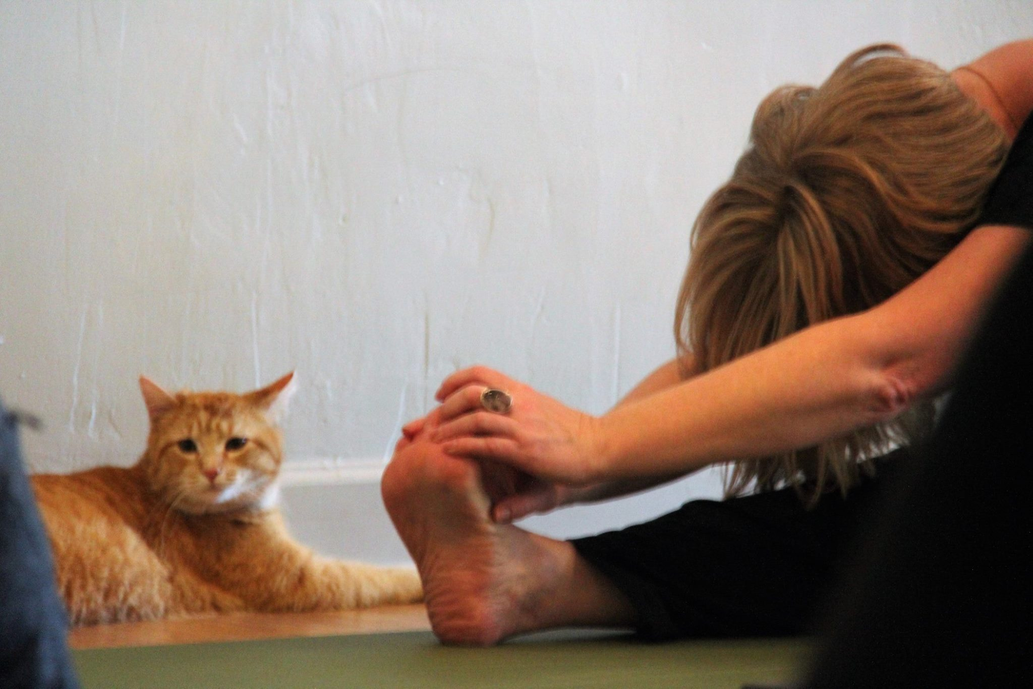 Cat Yoga Feb 2017_11.jpg