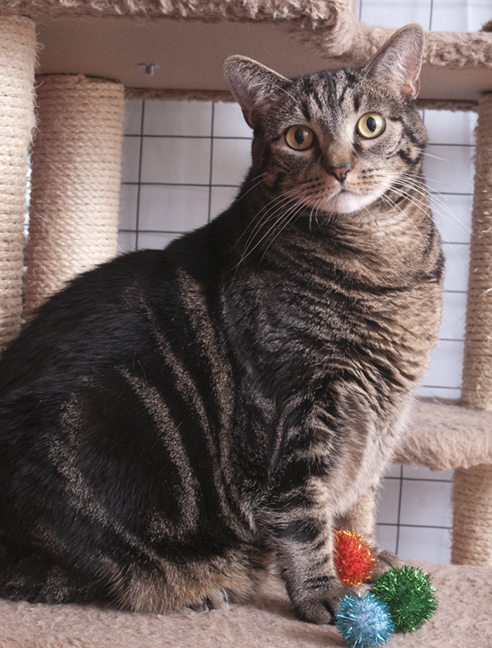 C.A.R.E. Cat Queen Agatha serves as the first beneficiary of the Precious Pays It Forward project.