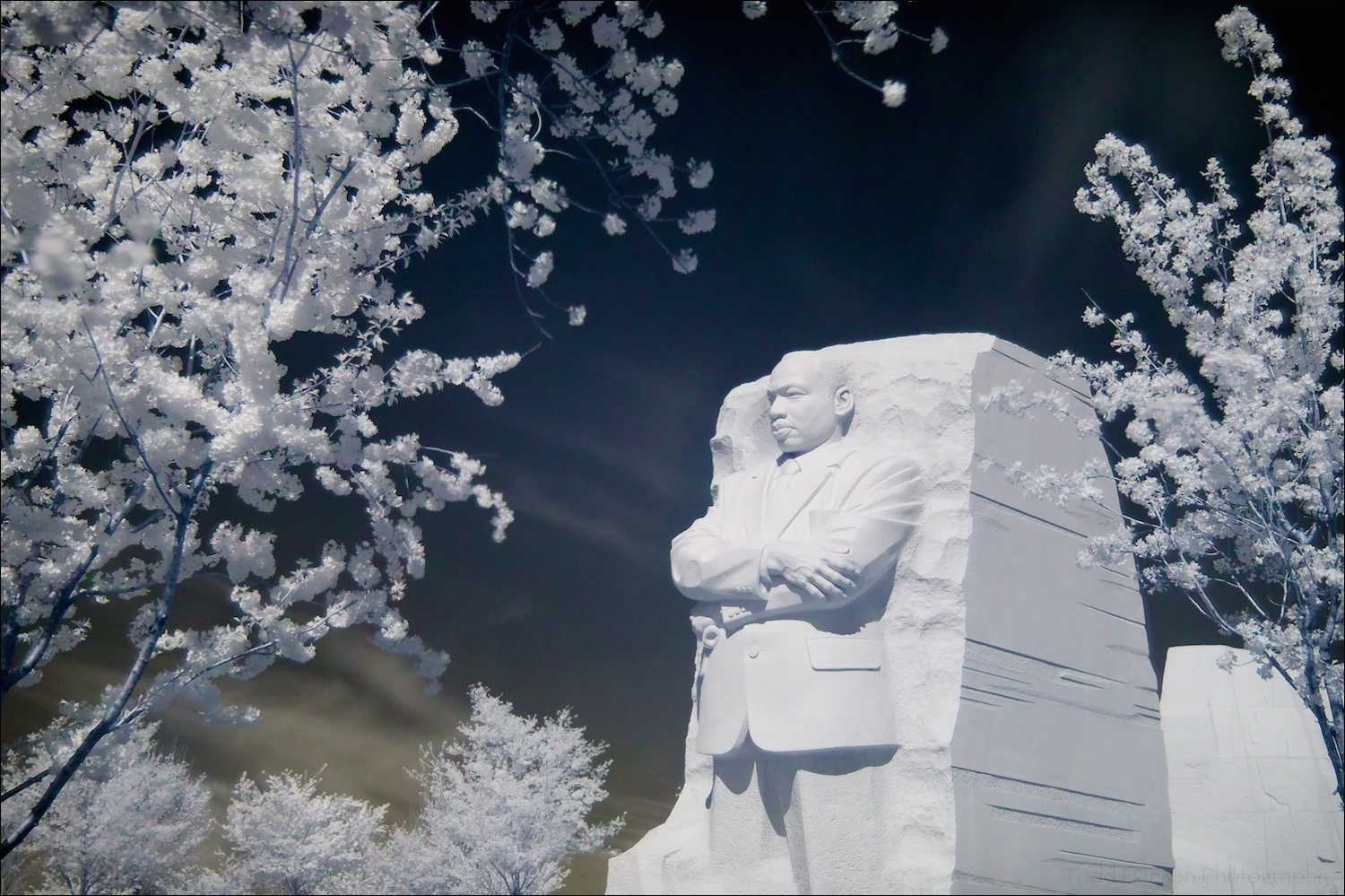 Martin Luther King, Jr. Memorial with cherry blossoms in bloom, in infrared.