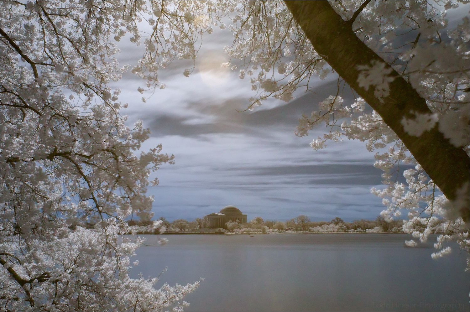 Thomas Jefferson Memorial through cherry blossoms in bloom, in infrared with reversed red/blue channels, resulting in blue tones.