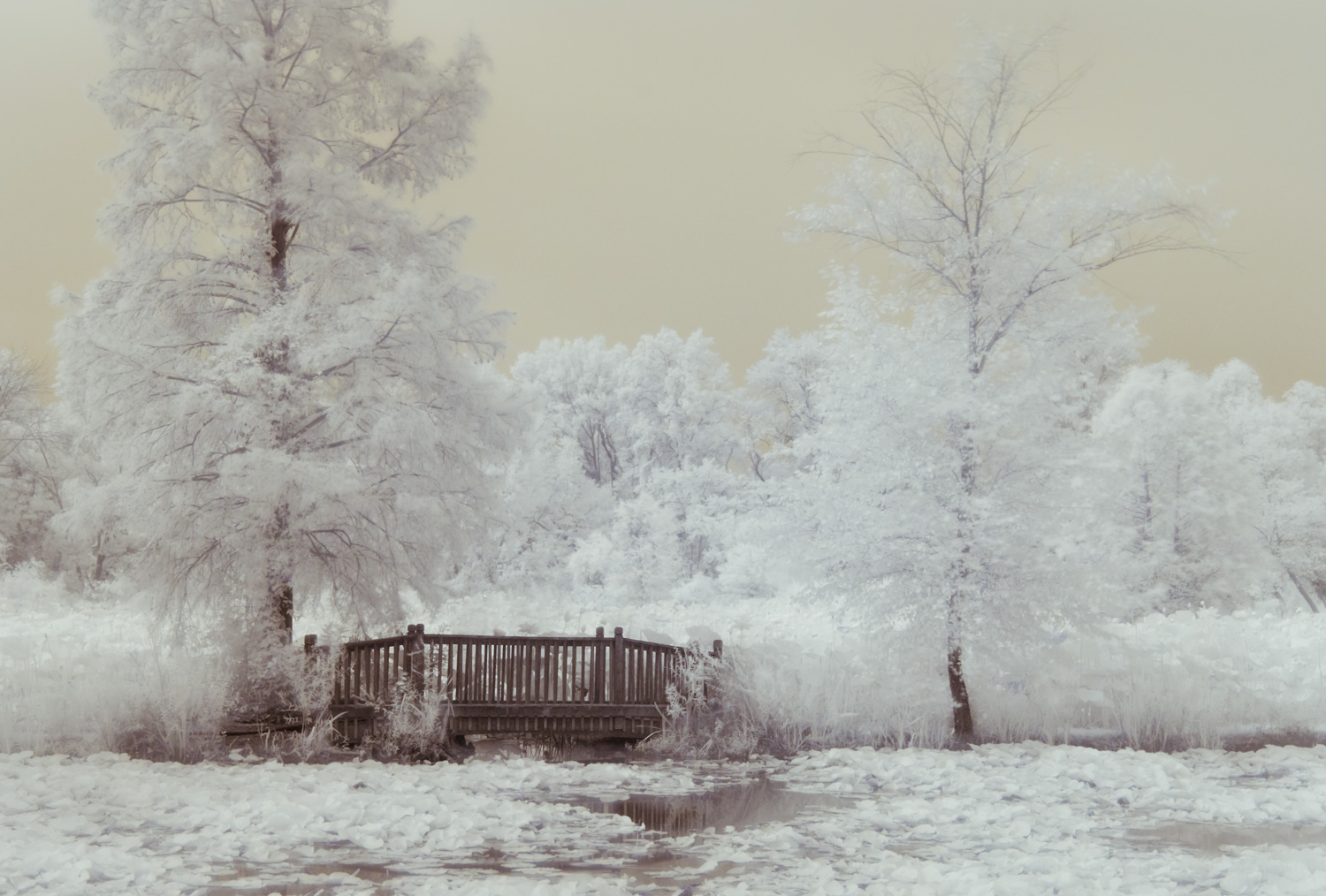 Kenilworth Aquatic Gardens Bridge in Infrared
