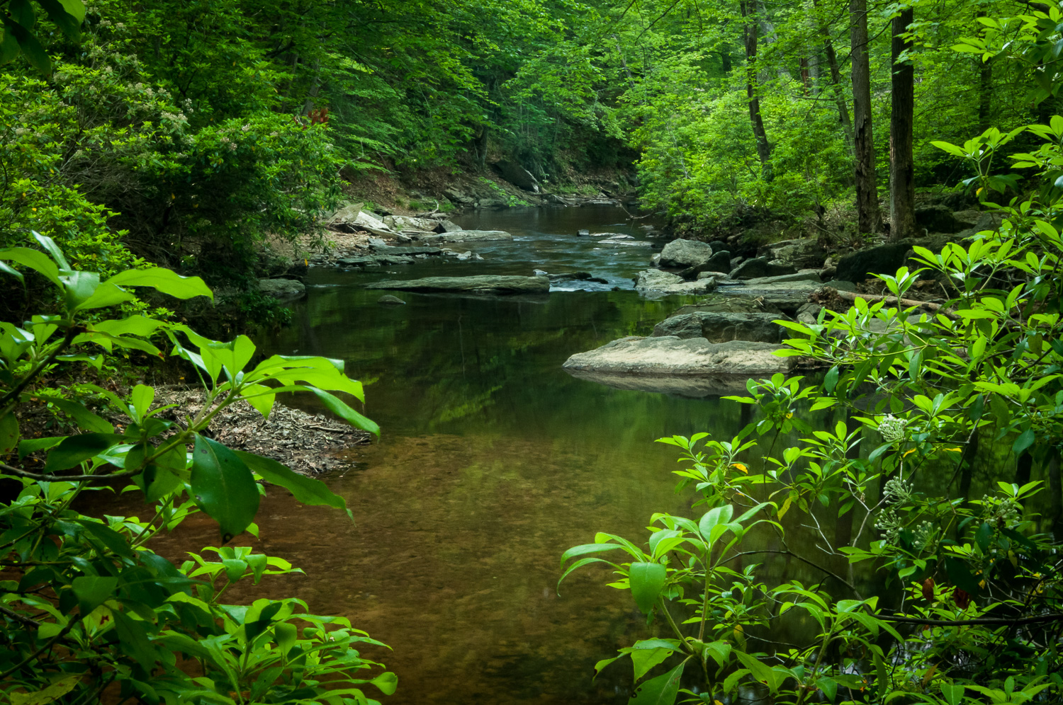 Stream in Prince William Forest Park