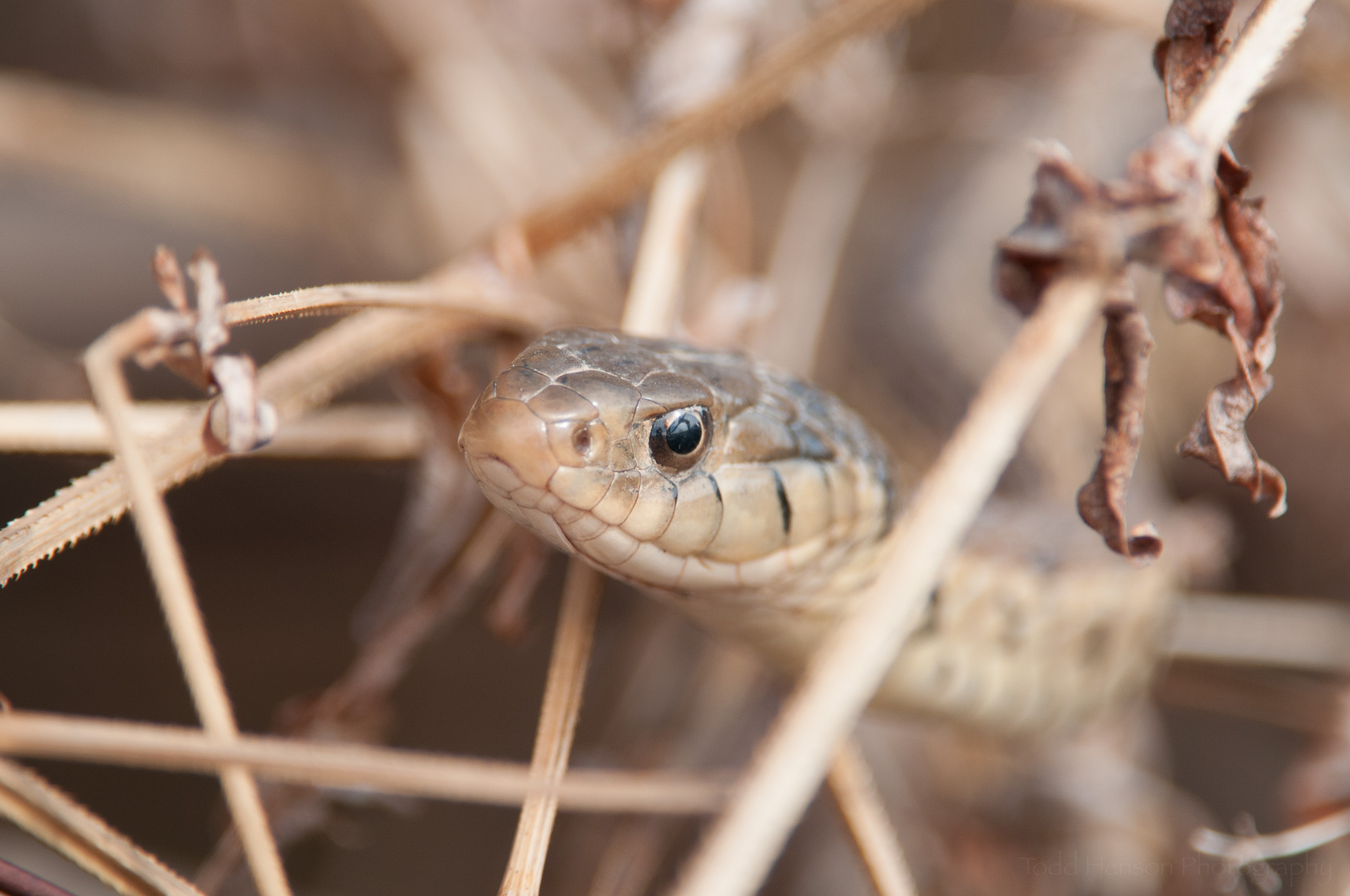 Notice how little of the snake is in focus. The camera is not parallel to the body of the snake.