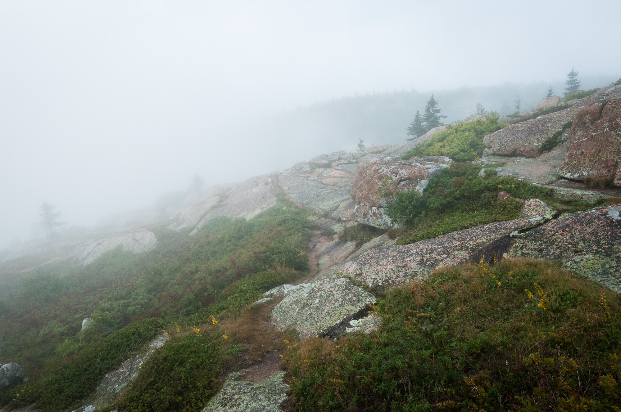 Foggy slope on Cadillac Mountain