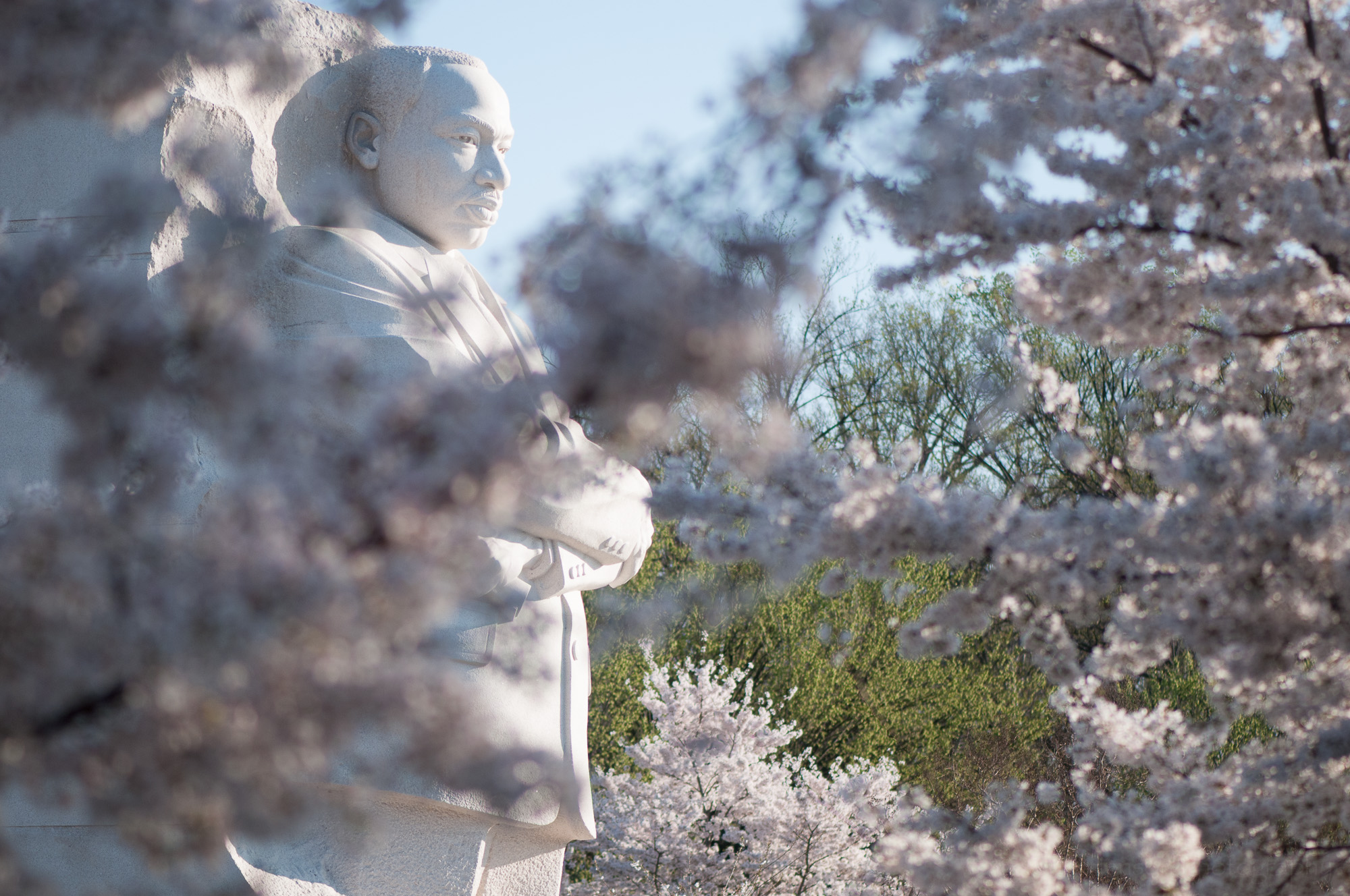 Sculpture at Martin Luther King, Jr. Memorial through cherry blossoms