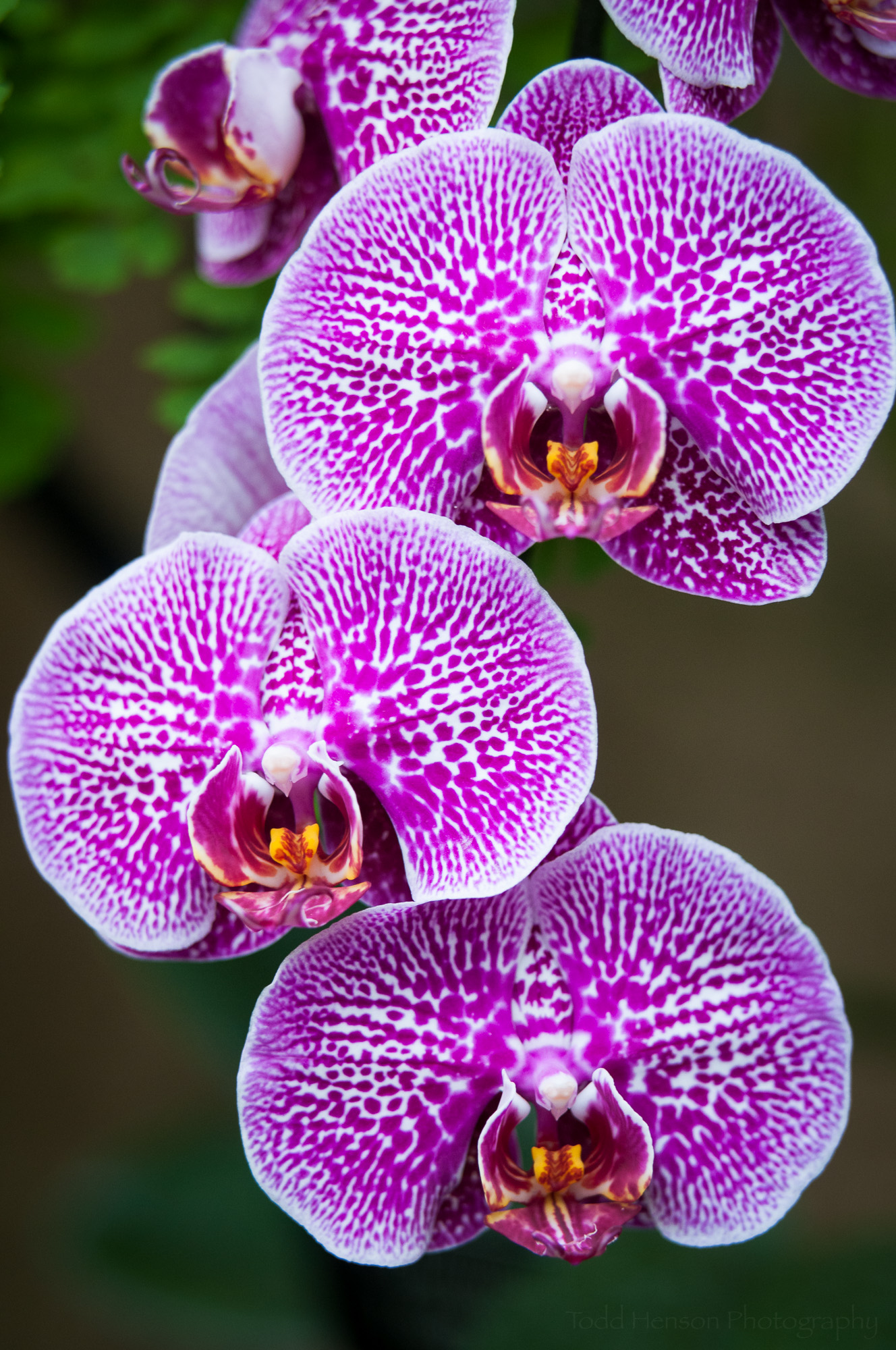 Grouping of orchid flowers