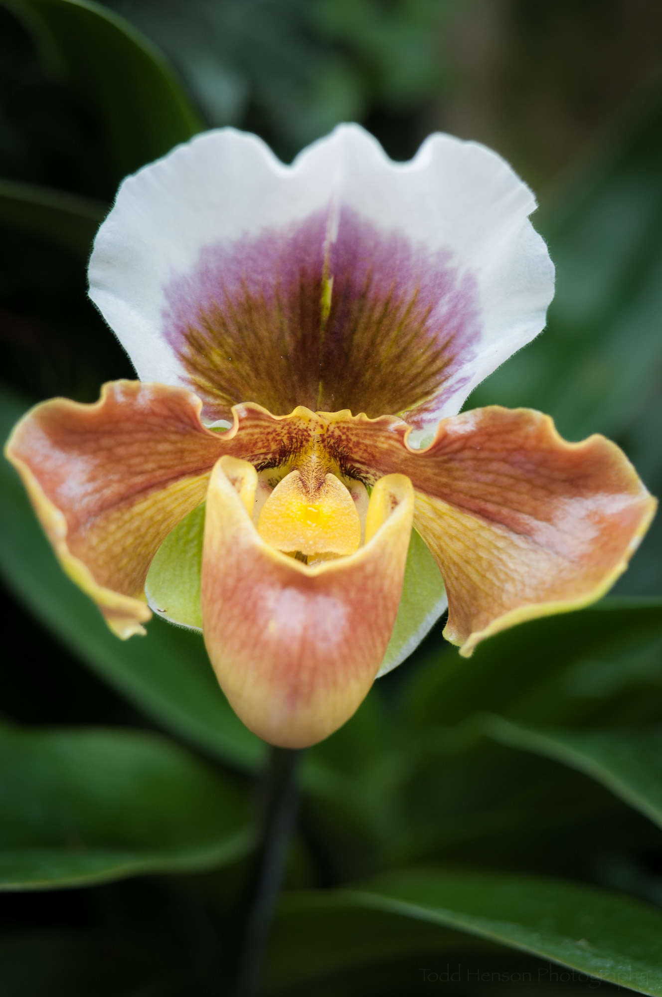 Orchids come in so many shapes, colors, and patterns