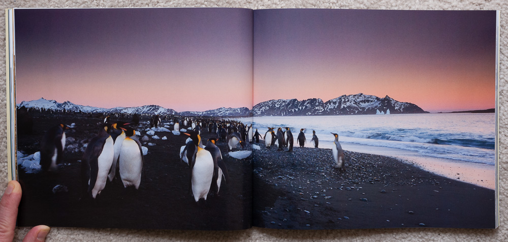 Travels to the Edge: A Photo Odyssey   - South Georgia Island, The Southern Ocean