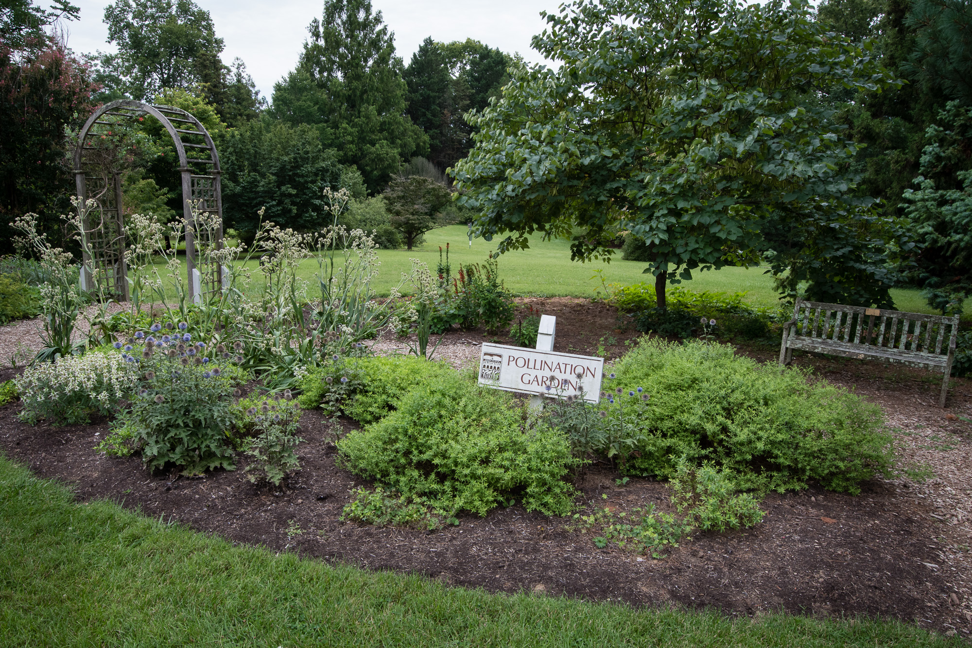 The Arboretum has many gardens, this one being a pollination garden.