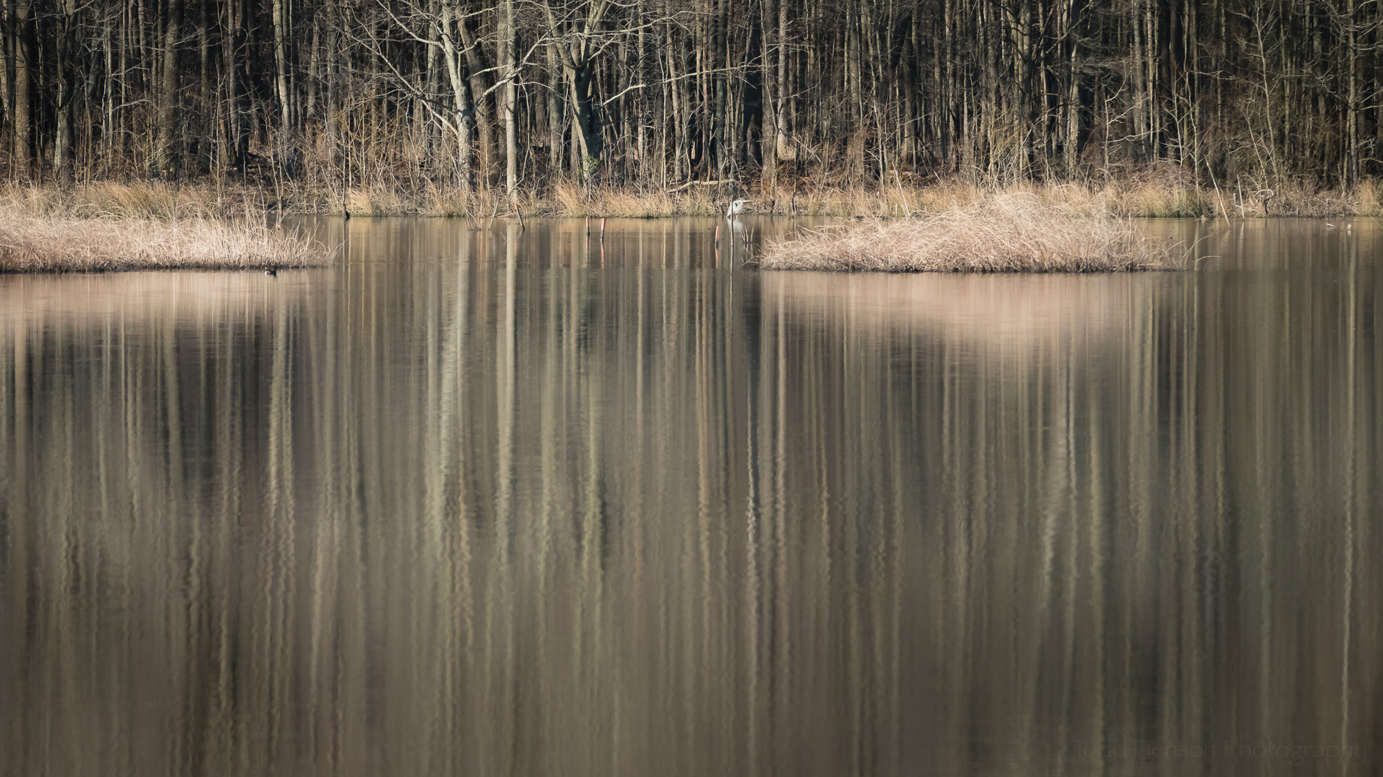 Reflections in the Wetlands . Click on the image for a larger view.