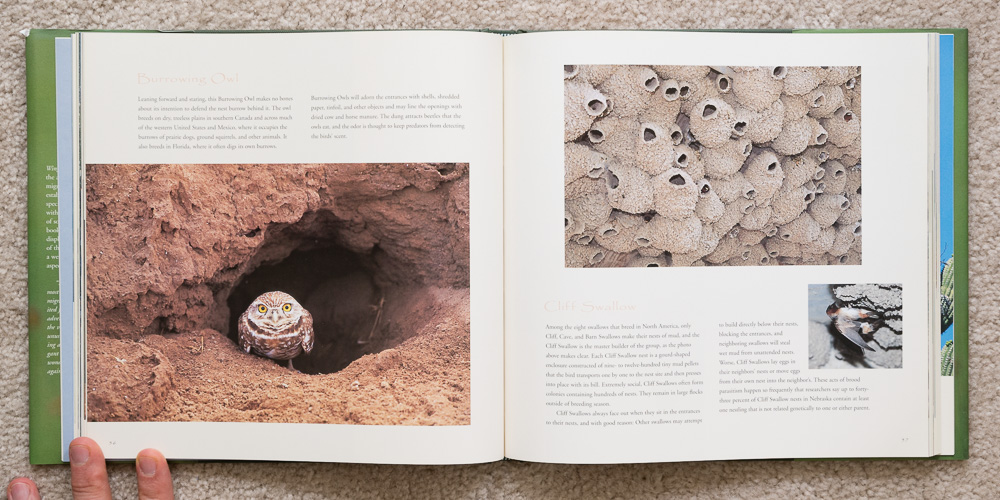 Wings of Spring   (pages 56 - 57). Burrowing Owl and Cliff Swallow.