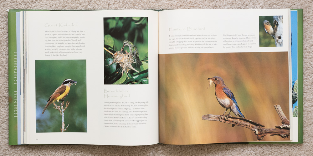 Wings of Spring   (pages 88 - 89). Great Kiskadee, Broad-billed Hummingbird, and Eastern Bluebird.