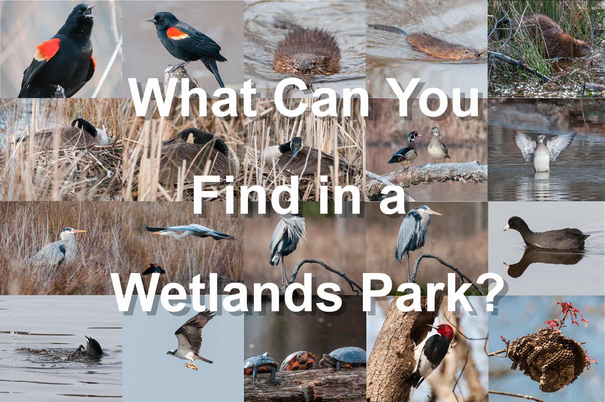 What can you find in a wetlands park?