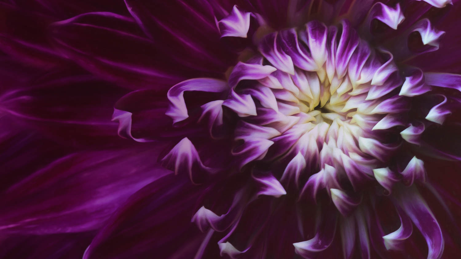 The Art of Flower Photography  with Kathleen Clemons  . Image credit: CreativeLive
