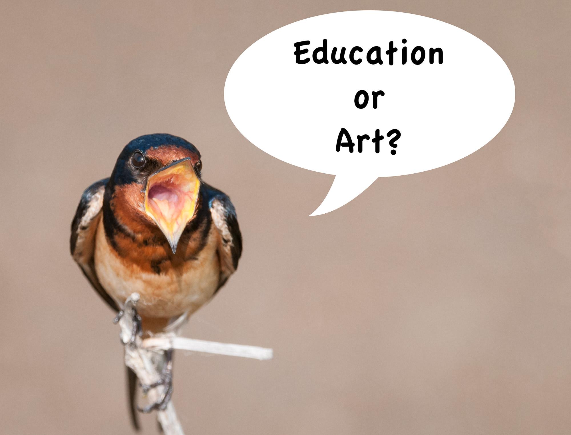 "Barn Swallow Singing ""Education or Art?"""