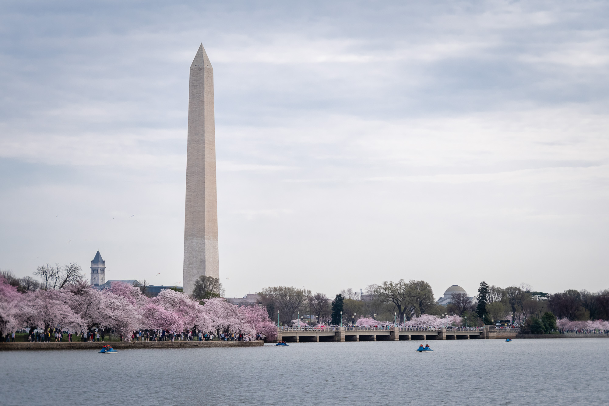 Washington Monument Cherry Blossom Crowds