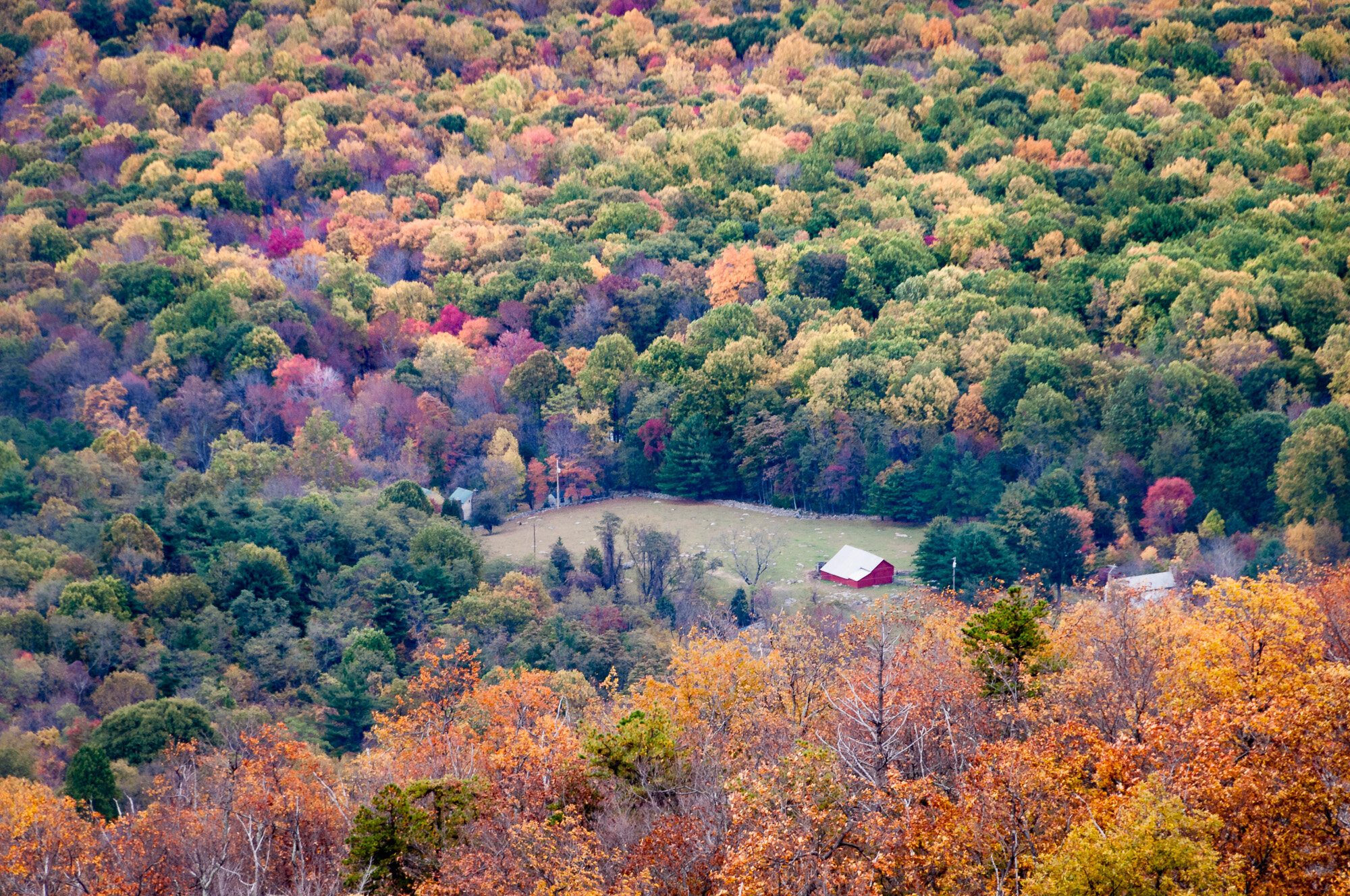 Down in the Valley, a view of a farm amongst the foliage.