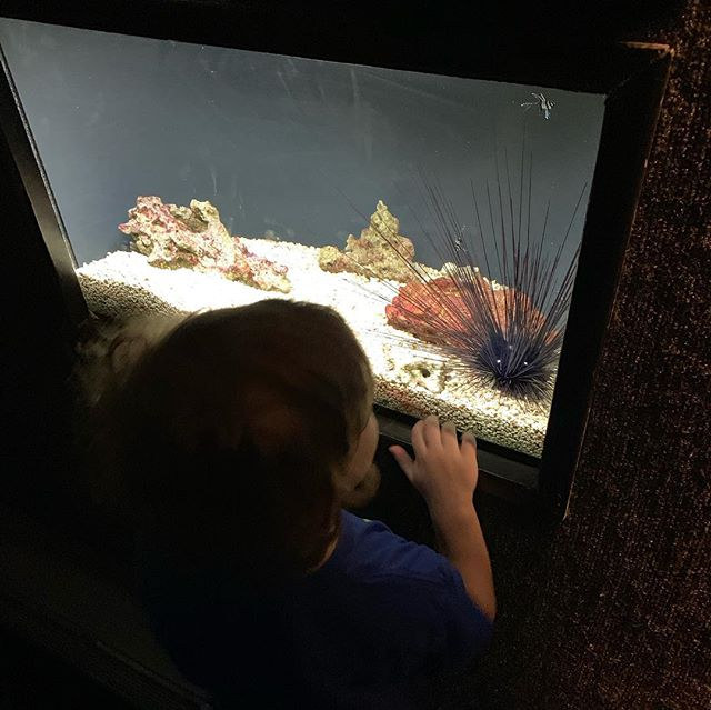 Another fun trip to the aquarium! He loves finding all the different colored frogs, seeing the seahorses, and the jellies.