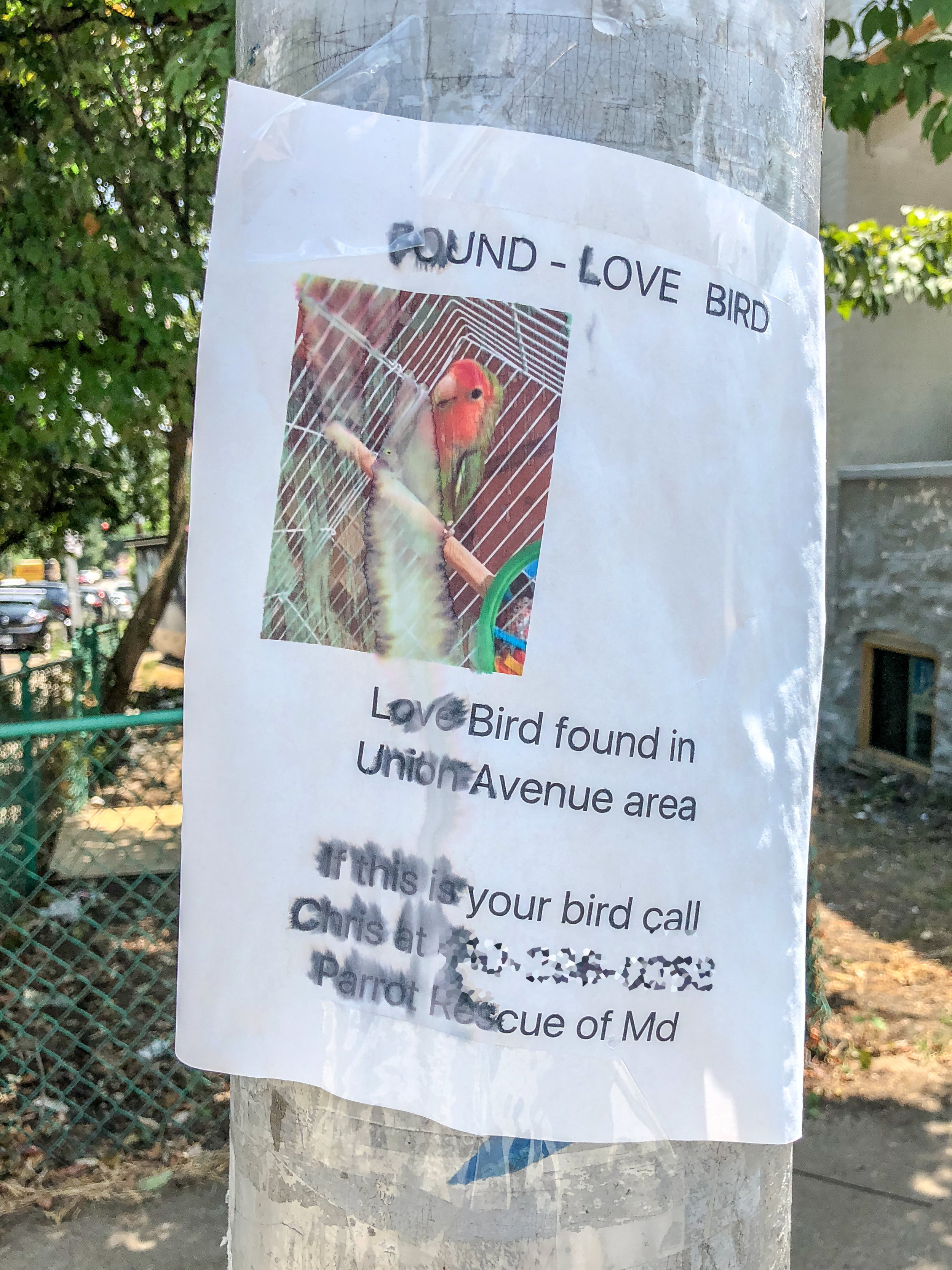 lovebird (1 of 1).jpg