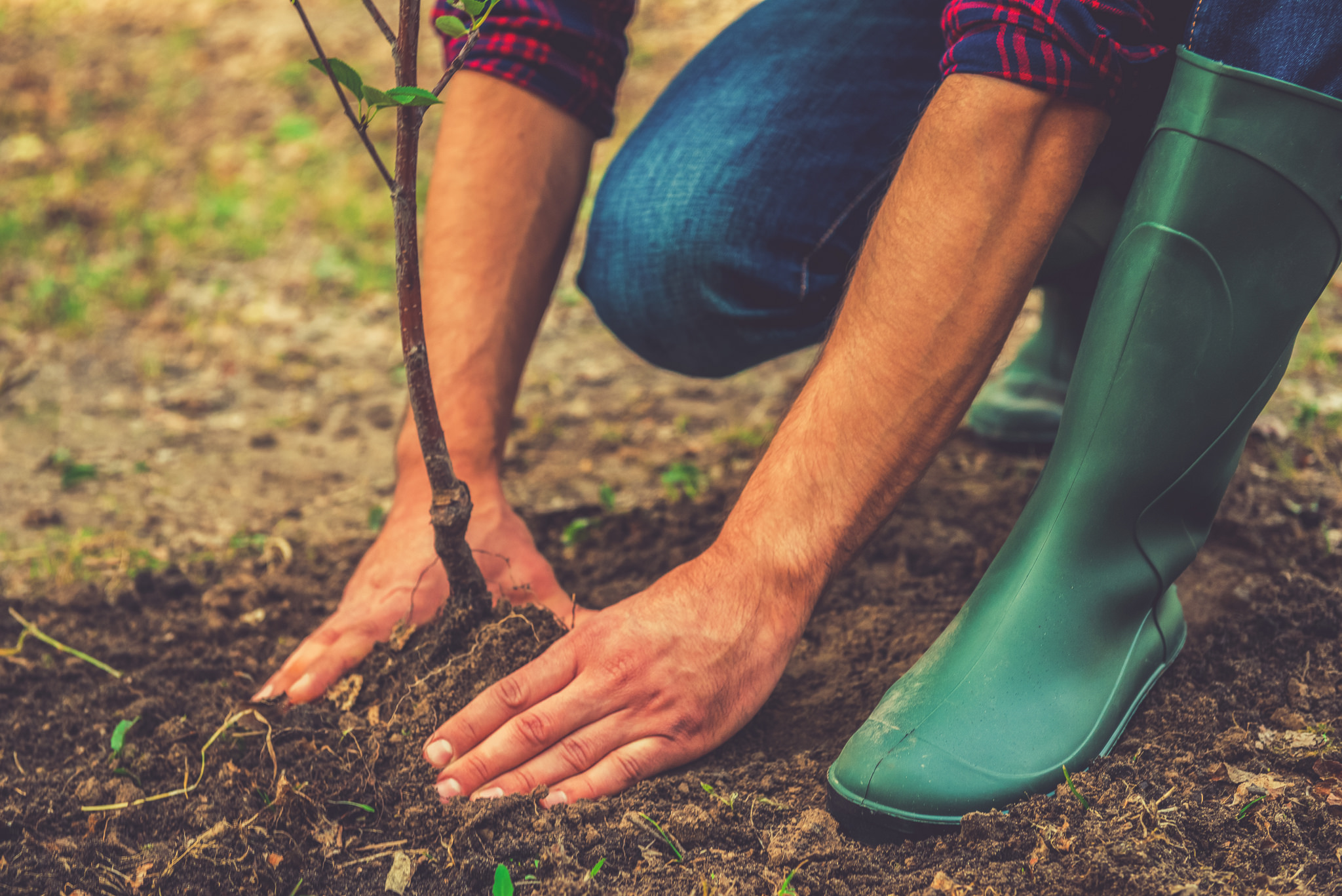 Tips For Planting Your Tree On Earth Day