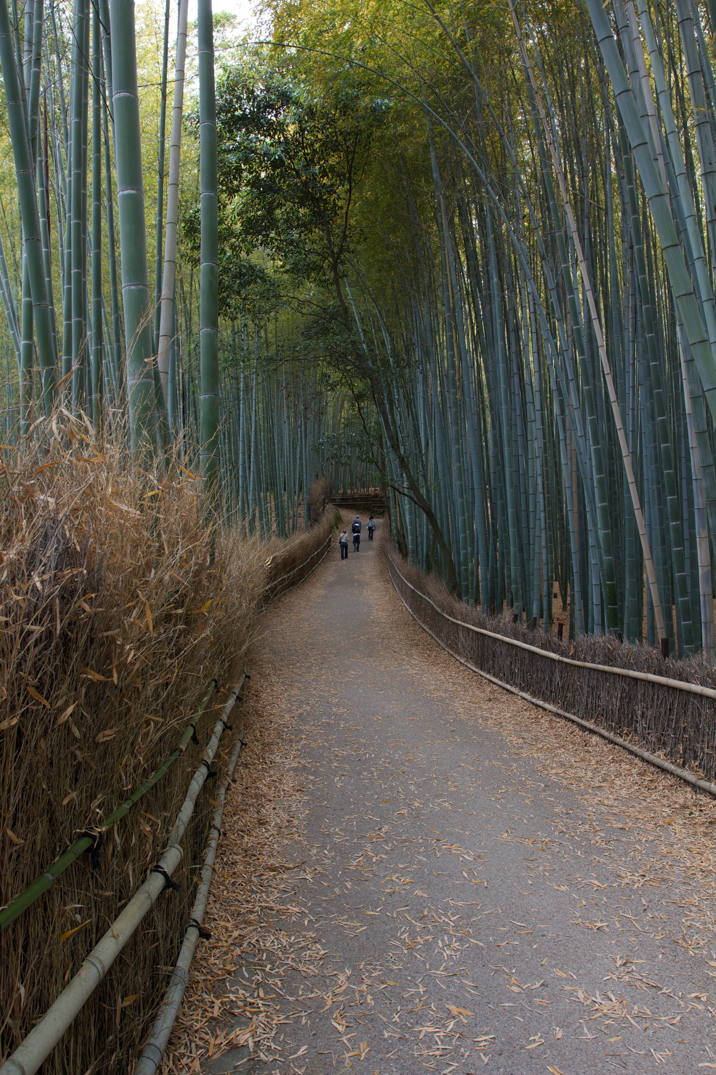 Bamboo Grove, Kyoto (1).jpg