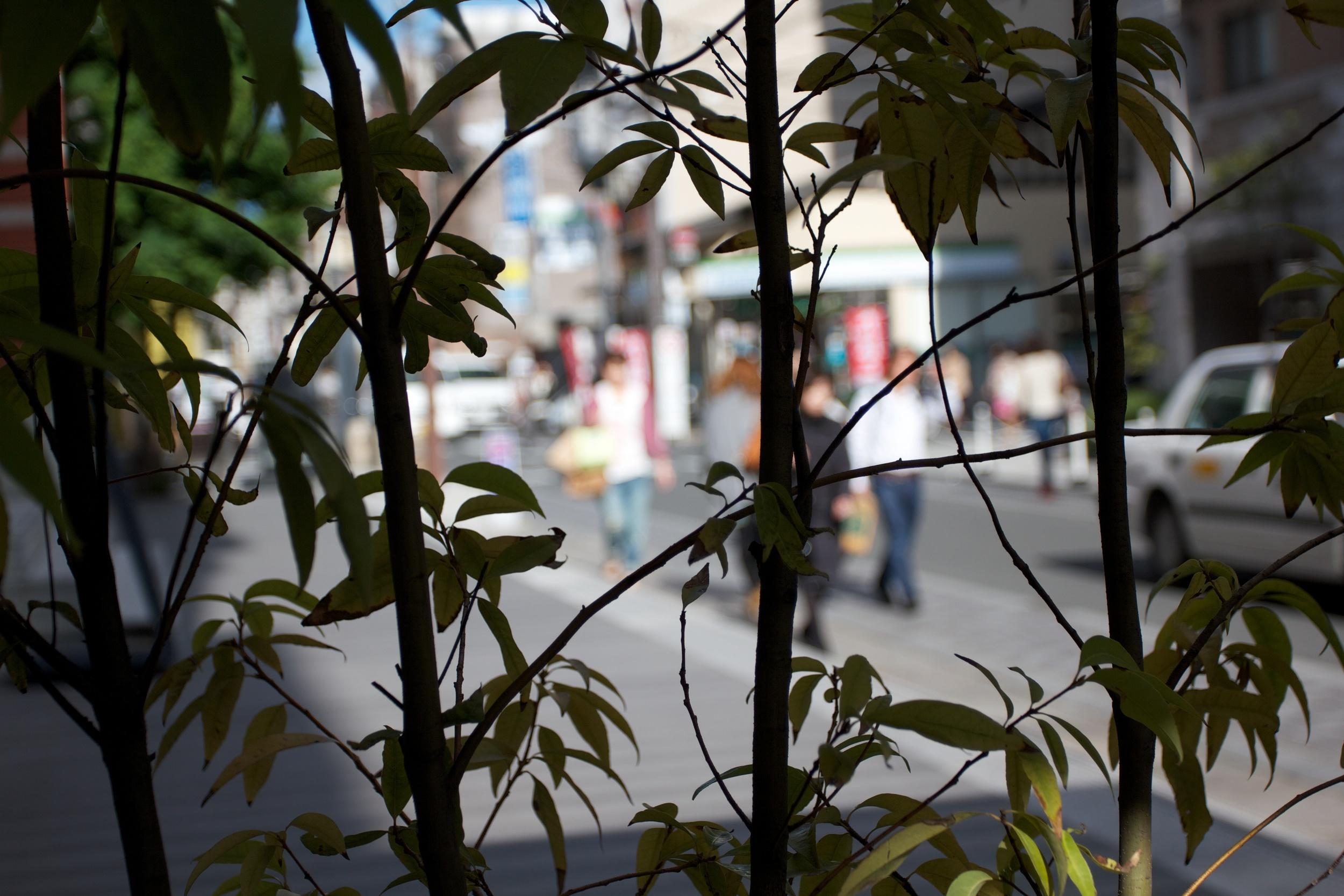 Kyoto Street.jpg