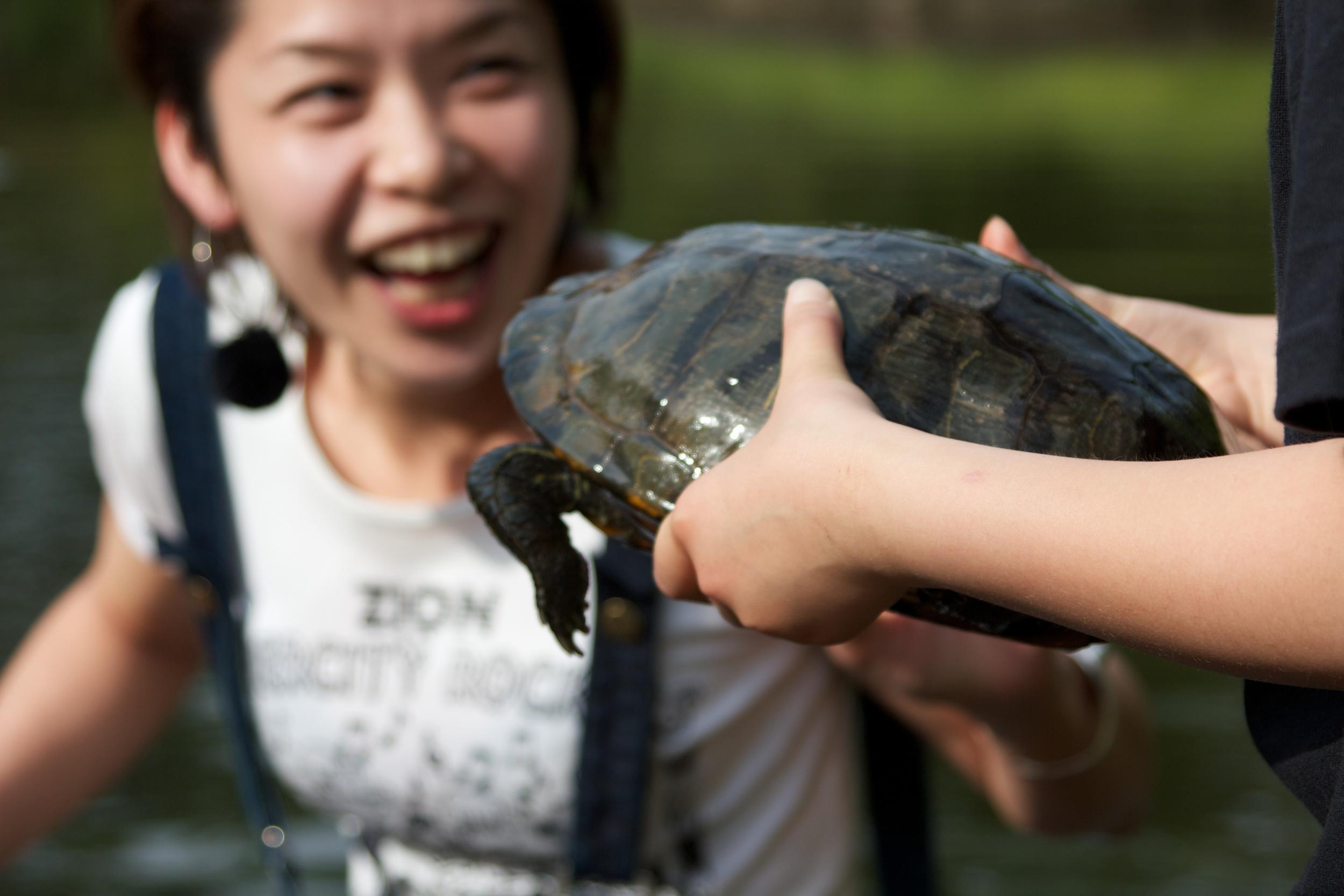 Turtle, Tokyo.jpg