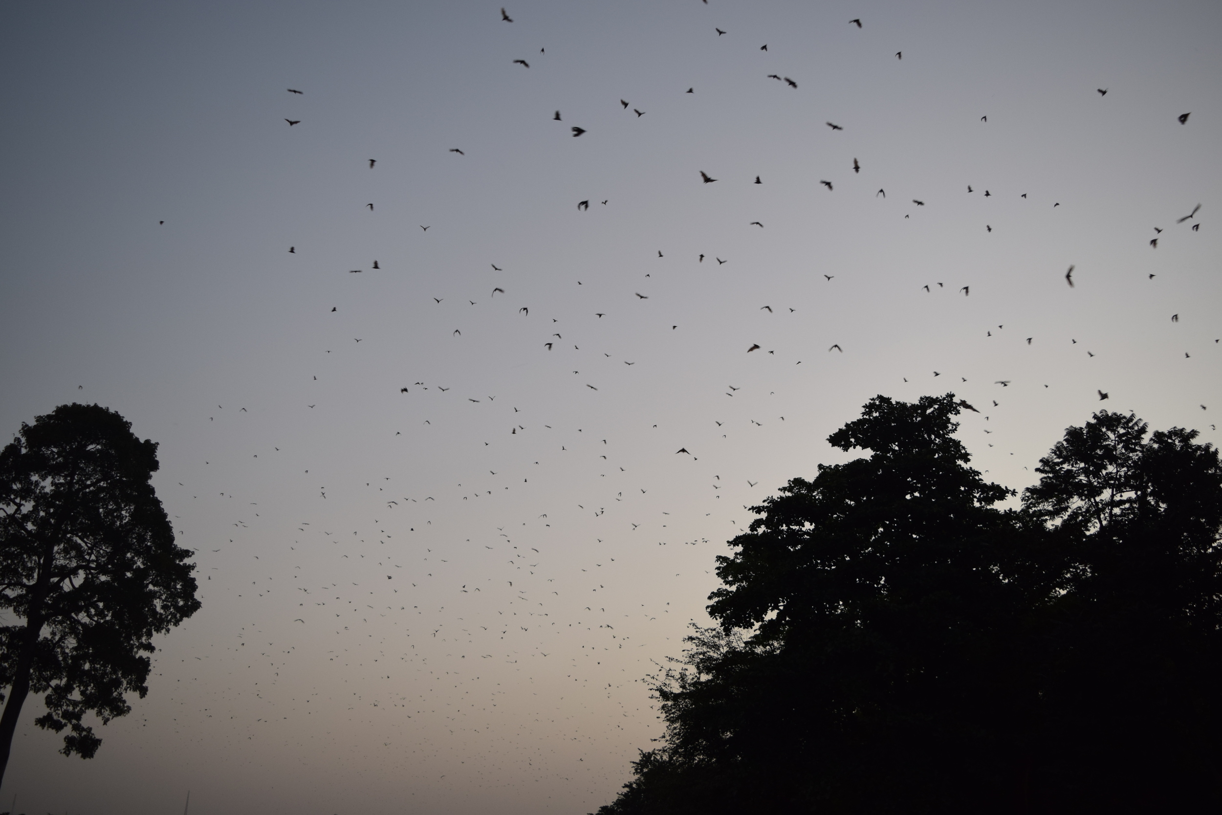 Bats came out to play at the resort