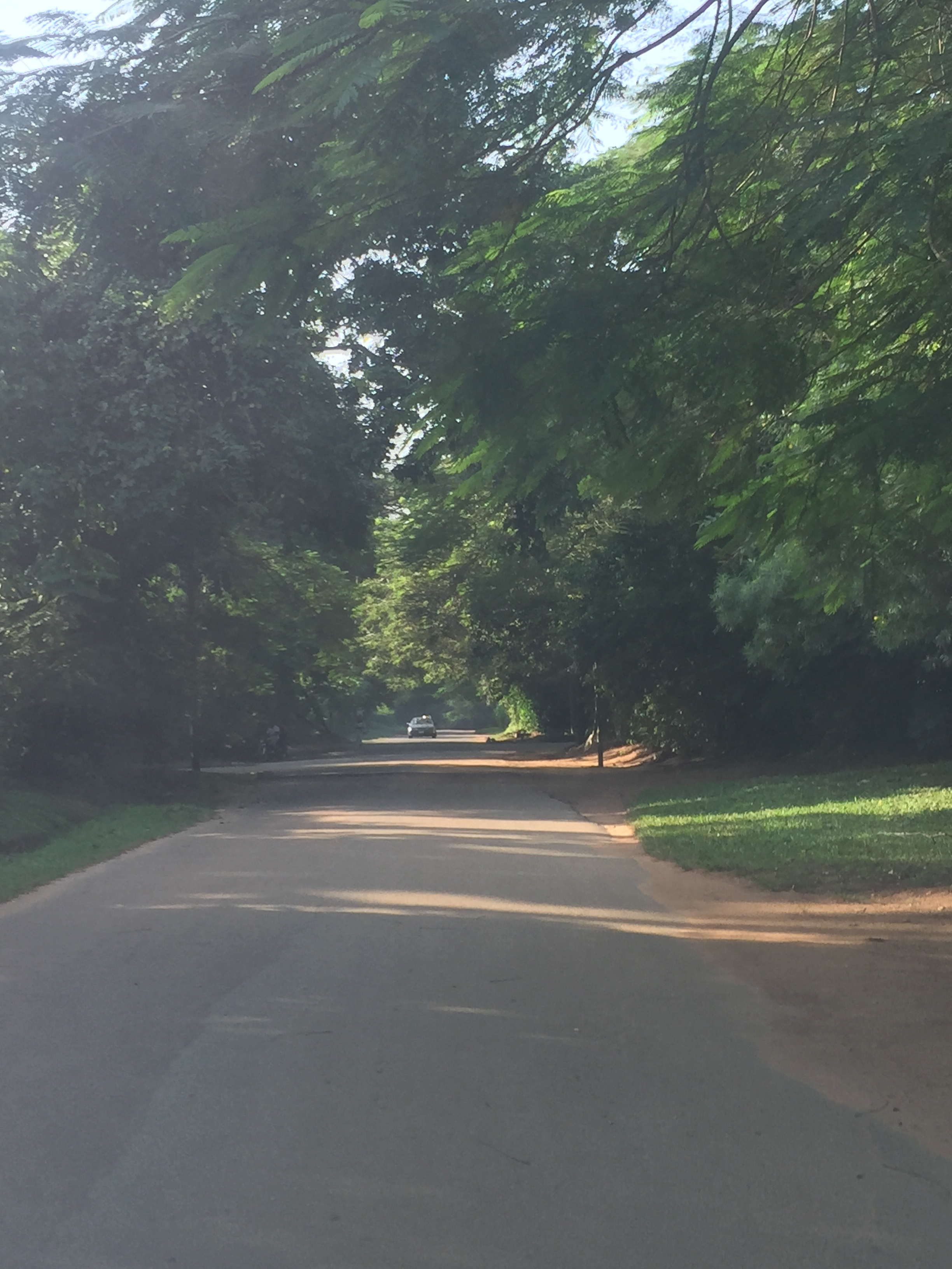 Amina Way. (I used to walk here at night to clear my head and watch roaming squirrels).