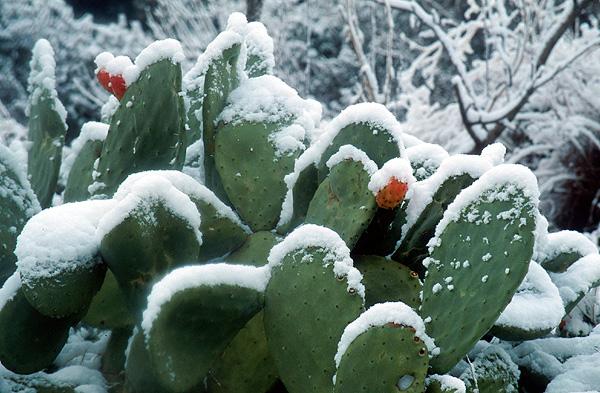 Snow022.jpg